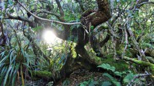Harmonisation Paix Forêt